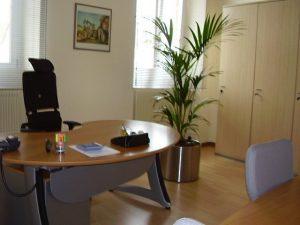 pensez aux plantes pour lutter contre le stress au travail job 53 le portail de l 39 emploi. Black Bedroom Furniture Sets. Home Design Ideas